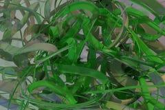 Het kleurrijke 3d teruggeven Samenstelling de achtergrond abstracte van CGI, bos van slordig koord geometrisch voor ontwerp, graf royalty-vrije illustratie