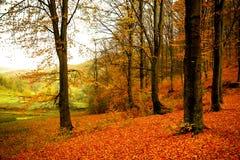 Het kleurrijke de herfst schilderen royalty-vrije stock afbeeldingen