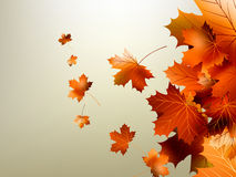 Het kleurrijke de herfstbladeren vallen. EPS 10 Stock Fotografie