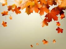 Het kleurrijke de herfstbladeren vallen. EPS 10 Stock Afbeeldingen