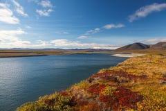 Het kleurrijke de herfsttoendra en Noordpoolgebied van rivieramguema Stock Foto