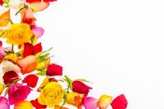 Het kleurrijke die kader van roze bloemblaadjes wordt gemaakt en nam bloemblaadjes toe Royalty-vrije Stock Afbeelding