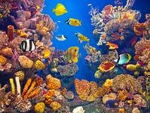 Het kleurrijke en trillende aquariumleven Stock Fotografie