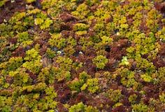 Het kleurrijke Fauna Groeien op de Rivier Stock Fotografie
