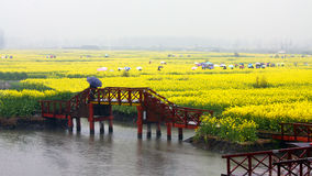 Het kleurrijke gebied van de verkrachtingsbloem in regen, Jiangsu, China Stock Foto
