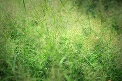 Het kleurrijke gras bloeit wegkant tussen stoepreis Royalty-vrije Stock Afbeelding