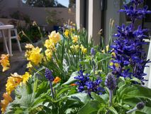 Het kleurrijke ingemaakte planten Royalty-vrije Stock Afbeelding