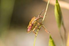 Het kleurrijke Insect van het Schild Royalty-vrije Stock Foto