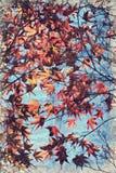 het kleurrijke Japanse gebladerte van de esdoornherfst Digitaal Art Impasto Oil royalty-vrije stock foto's