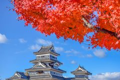 Het kleurrijke Kasteel van Seizoenmatsumoto in de Herfst Stock Foto