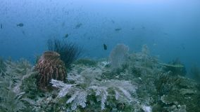 Het kleurrijke koraalrif 4k van Raja Ampat Indonesia stock video