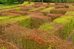 Het kleurrijke labyrint Stock Afbeeldingen