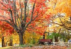 Het kleurrijke Landschap van de Herfst stock afbeelding