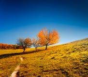 Het kleurrijke Landschap van de Herfst De Oekraïne, Europa Royalty-vrije Stock Foto