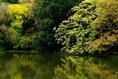 Het kleurrijke landschap van het dalingslandschap Stock Foto's