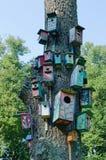 Het kleurrijke nestkastje van vogelhuizen hangt oude boomboomstam Stock Afbeeldingen