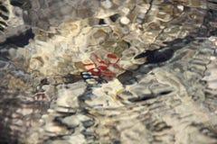 Het kleurrijke onderwaterleven Onderwater abstracte textuur stock afbeeldingen
