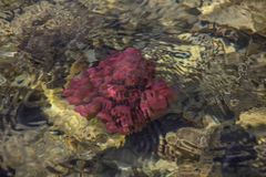 Het kleurrijke onderwaterleven Onderwater abstracte textuur royalty-vrije stock foto's