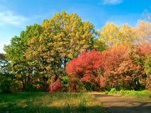 Het kleurrijke park van de herfst Stock Foto's