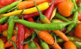Het kleurrijke volledige frame van de Spaanse peperpeper Stock Afbeeldingen