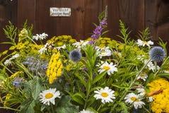 Het kleurrijke weelderige boeket met distels en martenflies en weide bloeit voor houten muur, Bunter à ¼ ppiger Strauß Stock Foto