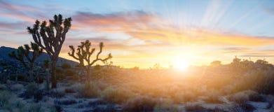 Het kleurrijke zonsondergang lichte glanzen over panoramisch woestijnlandschap stock afbeelding