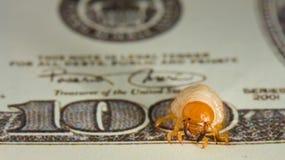 Het knagen aan van de worm door geld, inflatieconcept Stock Afbeelding