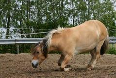 Het knielen paard Royalty-vrije Stock Fotografie