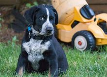 Het knipogen puppy royalty-vrije stock foto