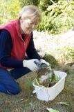 Het knippen in de tuin Stock Fotografie