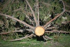 Het knipsel van de boom Stock Foto