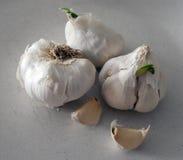 Het knoflook met groene spruiten Royalty-vrije Stock Fotografie