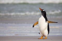 Het knorrige kijken Gentoo-Pinguïn Royalty-vrije Stock Fotografie