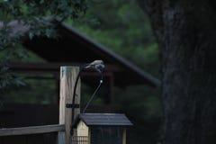 Het koelen bovenop de vogelvoeder Royalty-vrije Stock Afbeeldingen
