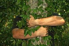 Het koesteren van een boom Stock Foto