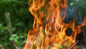 Het koken op brand Picknick Groot vuur in aard stock video