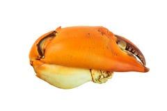 Het koken van krab op witte achtergrond Stock Foto's