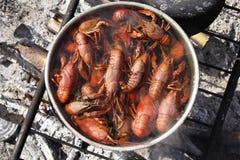 Het koken van rivierkreeften Stock Foto