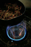 Het koken van rivierkreeften op een gazkooktoestel Stock Fotografie