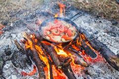 Het koken van witte paddestoelen met tomaten in een pan op een brand in het de lentebos royalty-vrije stock foto's
