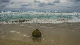 Het kokosnotenfruit ligt op het zand en door de oceaan gewassen royalty-vrije stock afbeeldingen