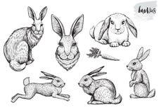 Het konijn en de hazen overhandigen getrokken vectorillustraties Stock Foto's