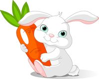 Het konijn houdt reuzewortel Royalty-vrije Stock Foto's