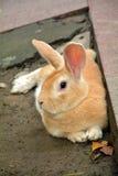 Het konijn legt op grond Royalty-vrije Stock Afbeelding