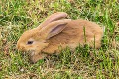 Het konijn ligt op gras Stock Afbeeldingen