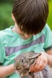 Het konijn is Mooi Dier van Aard Stock Afbeeldingen