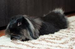 Het konijn ontspant Royalty-vrije Stock Afbeeldingen