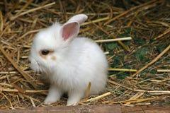 Het konijn van de baby Stock Foto