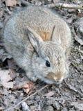 Het konijn van de babyuitrusting tegen aarde en bladeren wordt gecamoufleerd dat stock afbeeldingen