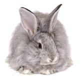 Het konijn van de behandeling Stock Afbeeldingen